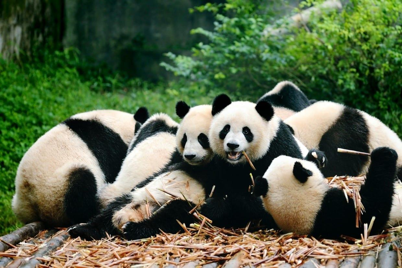 Great Wall to Giant Panda Tour 3