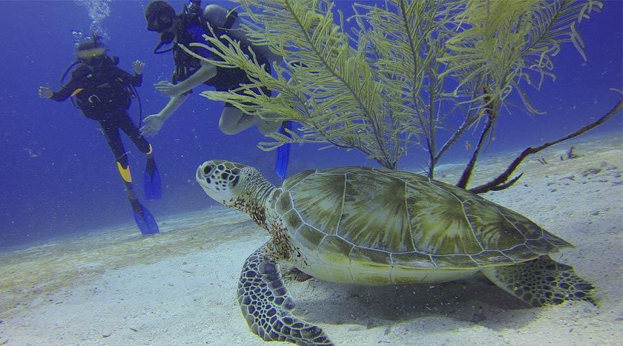 Amazing Scuba Diving