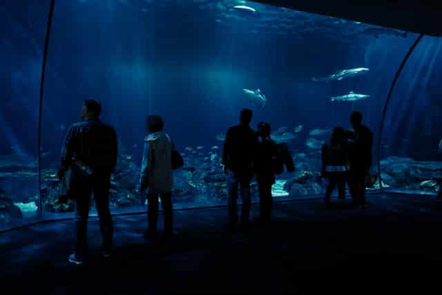 Shedd Aquarium Virtual Tour