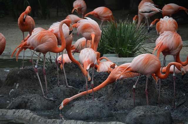 San Diego Zoo Live Cams