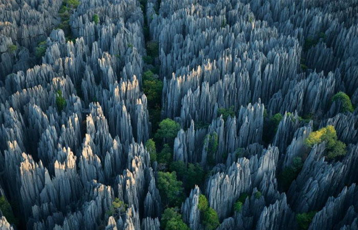 Stone Forest Geological Park