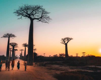 #Madagascar Baobabs and Lemur Tour