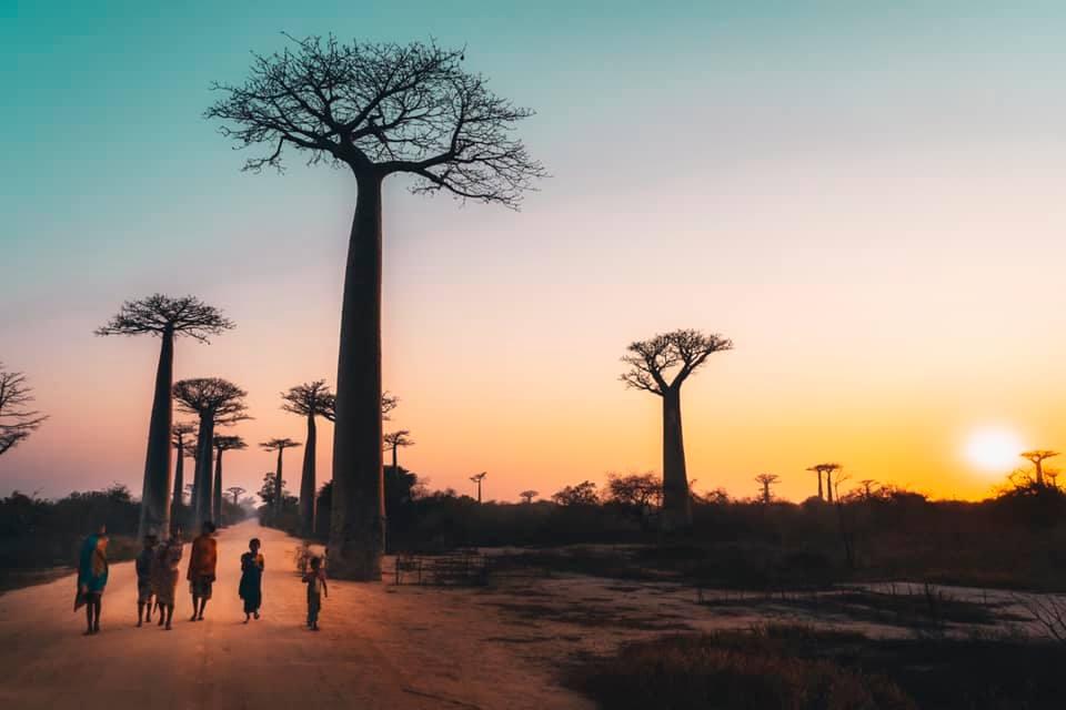 #Madagascar Baobabs and Lemur Tour