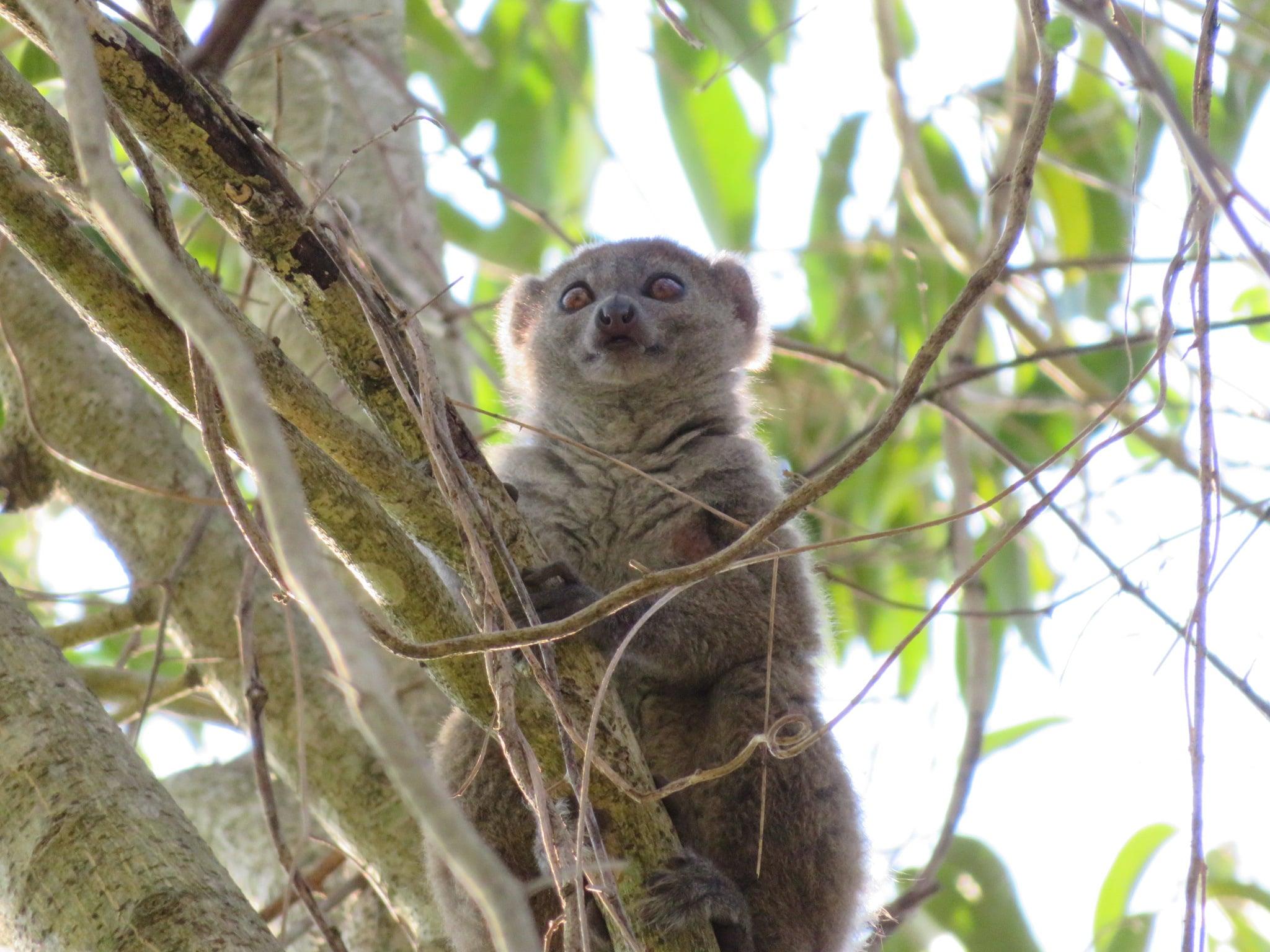 Madagascar Baobabs and Lemur Tour 1