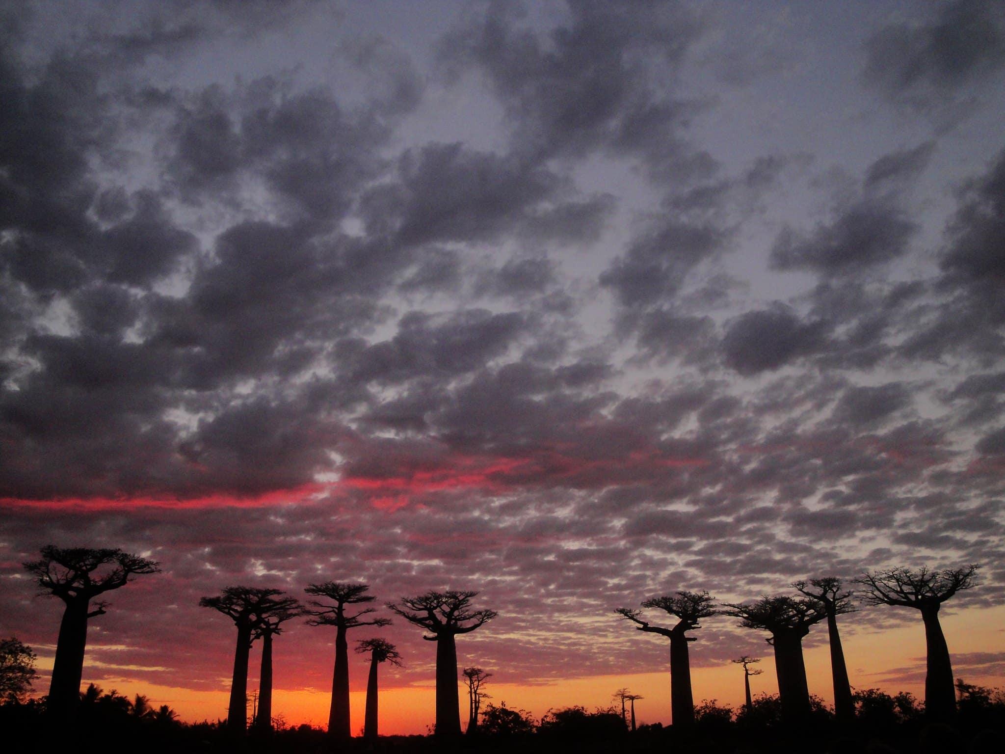 Madagascar Baobabs and Lemur Tour 2