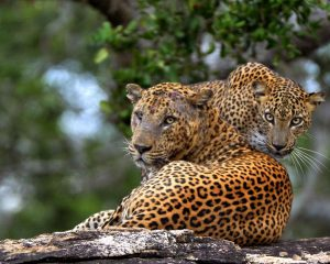 #Sri Lanka Wildlife Safari Tour