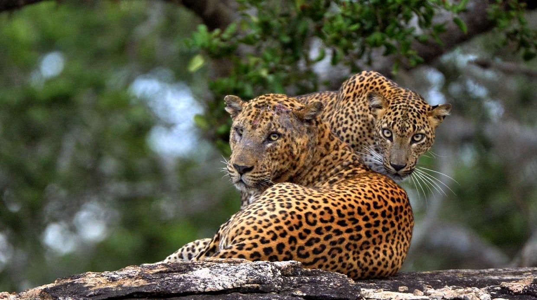 Sri Lanka Wildlife Safari Tour