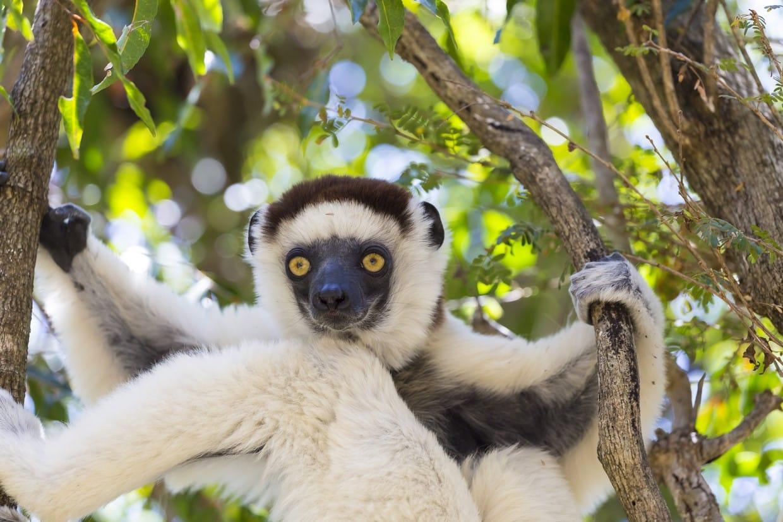Eastern Madagascar Tours 1