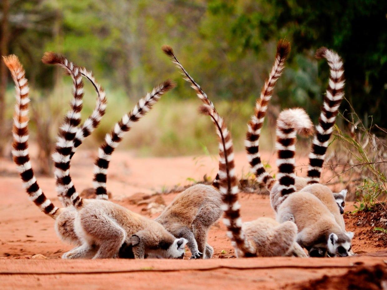Ranomafana National Park