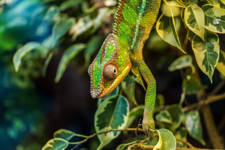 South Madagascar Discovery Tour 1