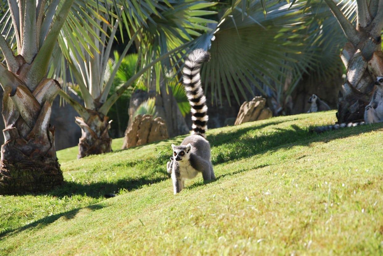 Madagascar Classic Tour 1