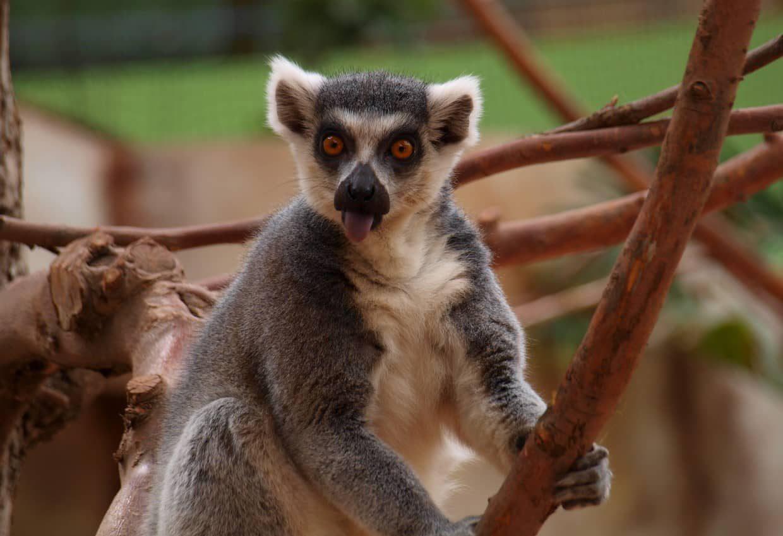 #Madagascar Classic Tour