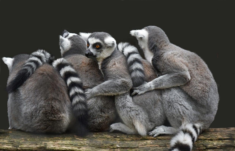 Madagascar Birding Tours 6
