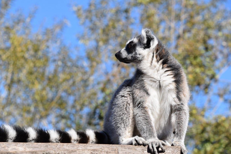 Eastern Madagascar Tours 6
