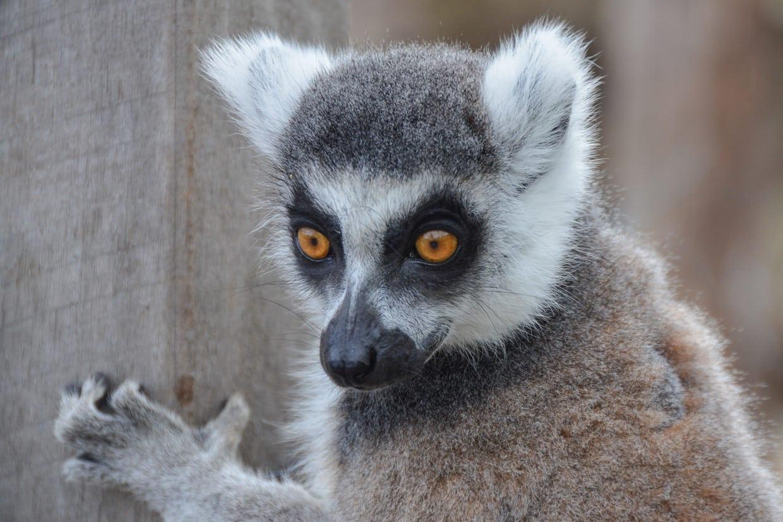 Wonders of South Madagascar Tour 1