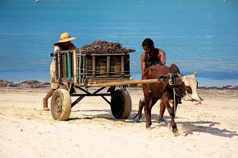Madagascar Classic Tour 3