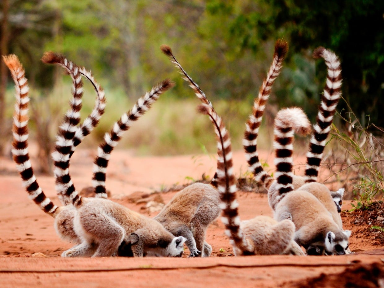 #Madagascar Tours