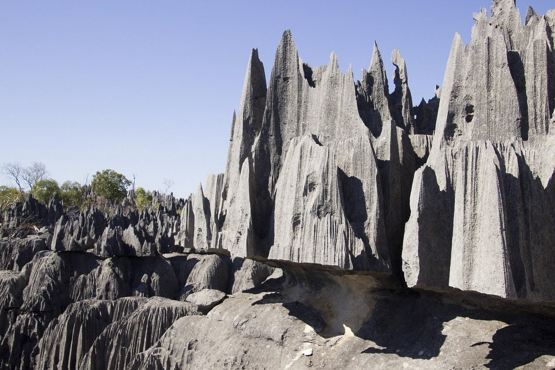 Madagascar Birding Tours 5