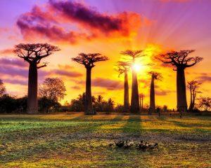 #Grand Tsingy of Bemaraha and Baobabs Avenue