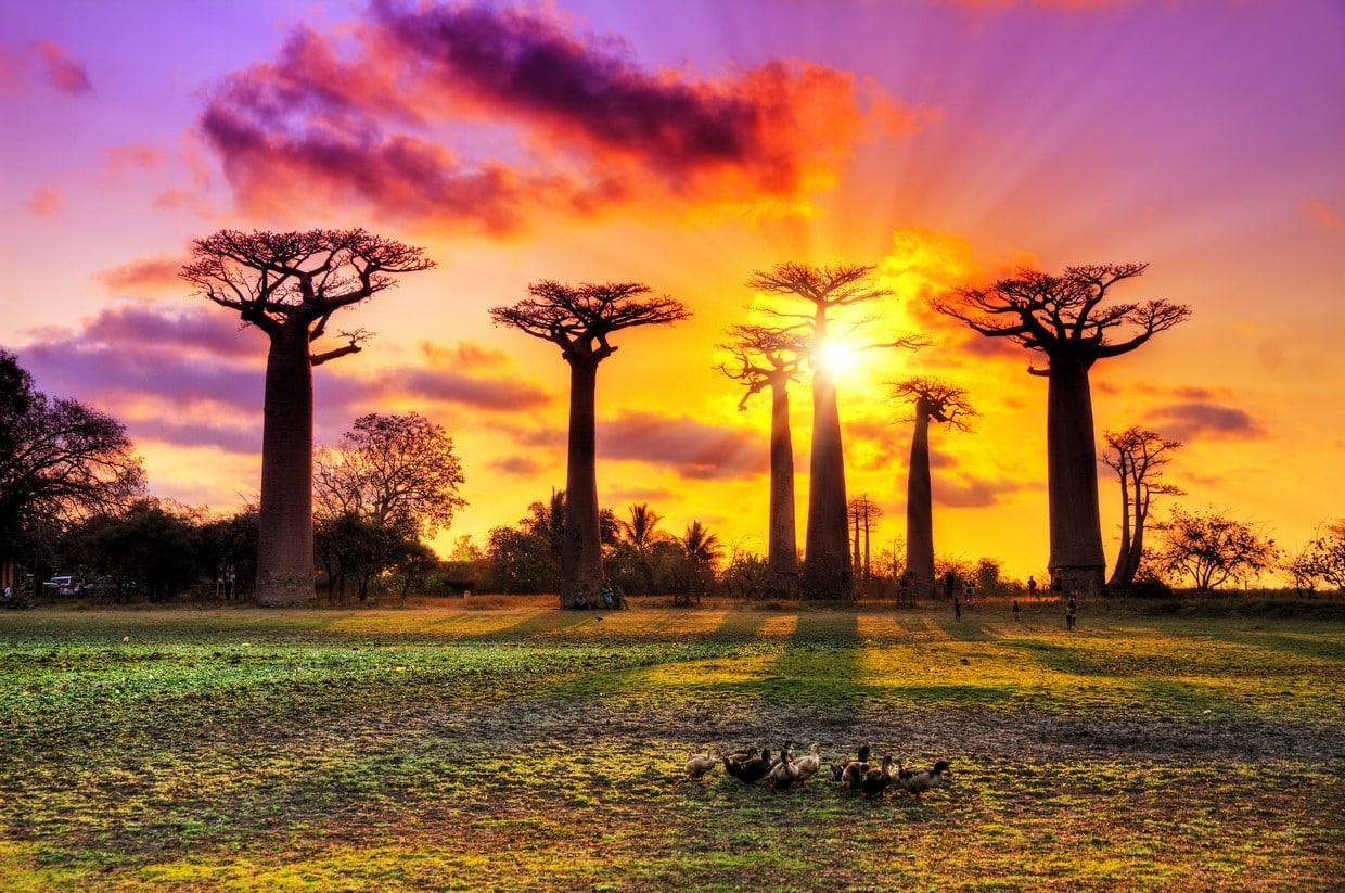 #Grand Tsingy of Bemaraha and Baobabs Avenue