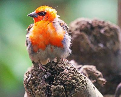 #Madagascar Birding Tours