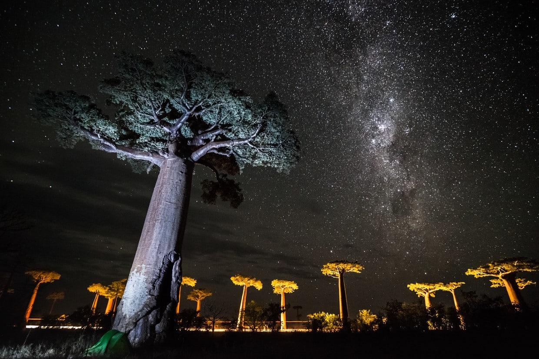 Grand Tsingy of Bemaraha and Baobabs Avenue 3