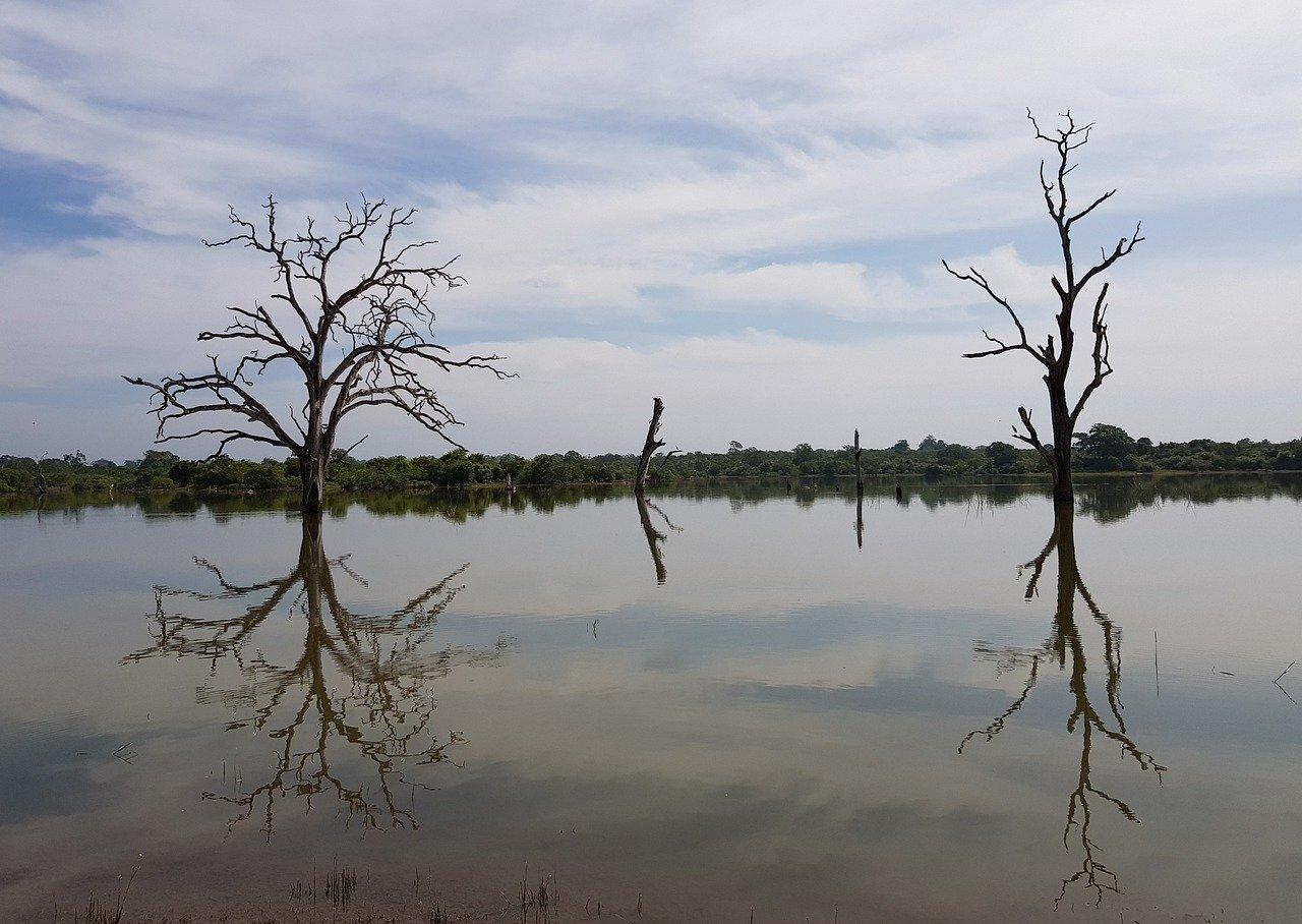 Madu River Boat Safari 4