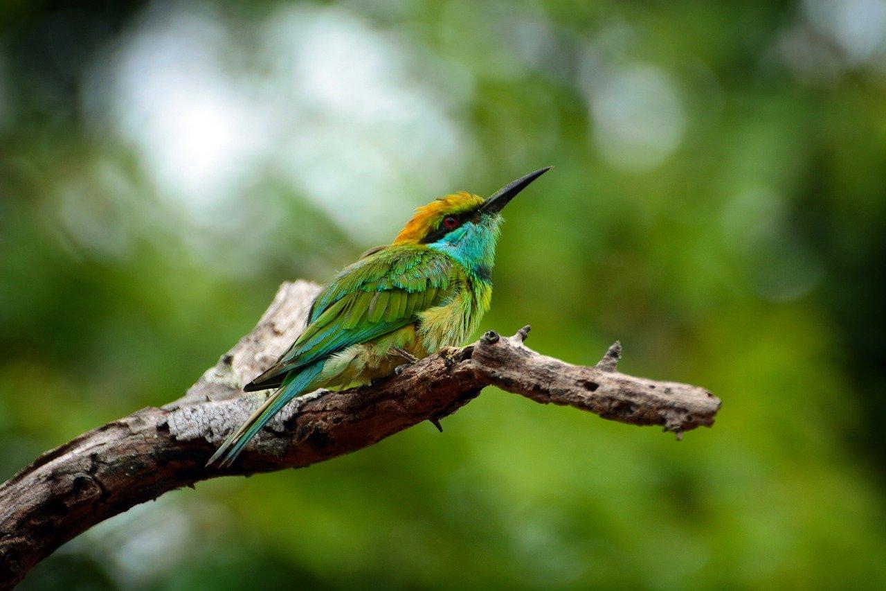 #Sri Lanka Birding Tour