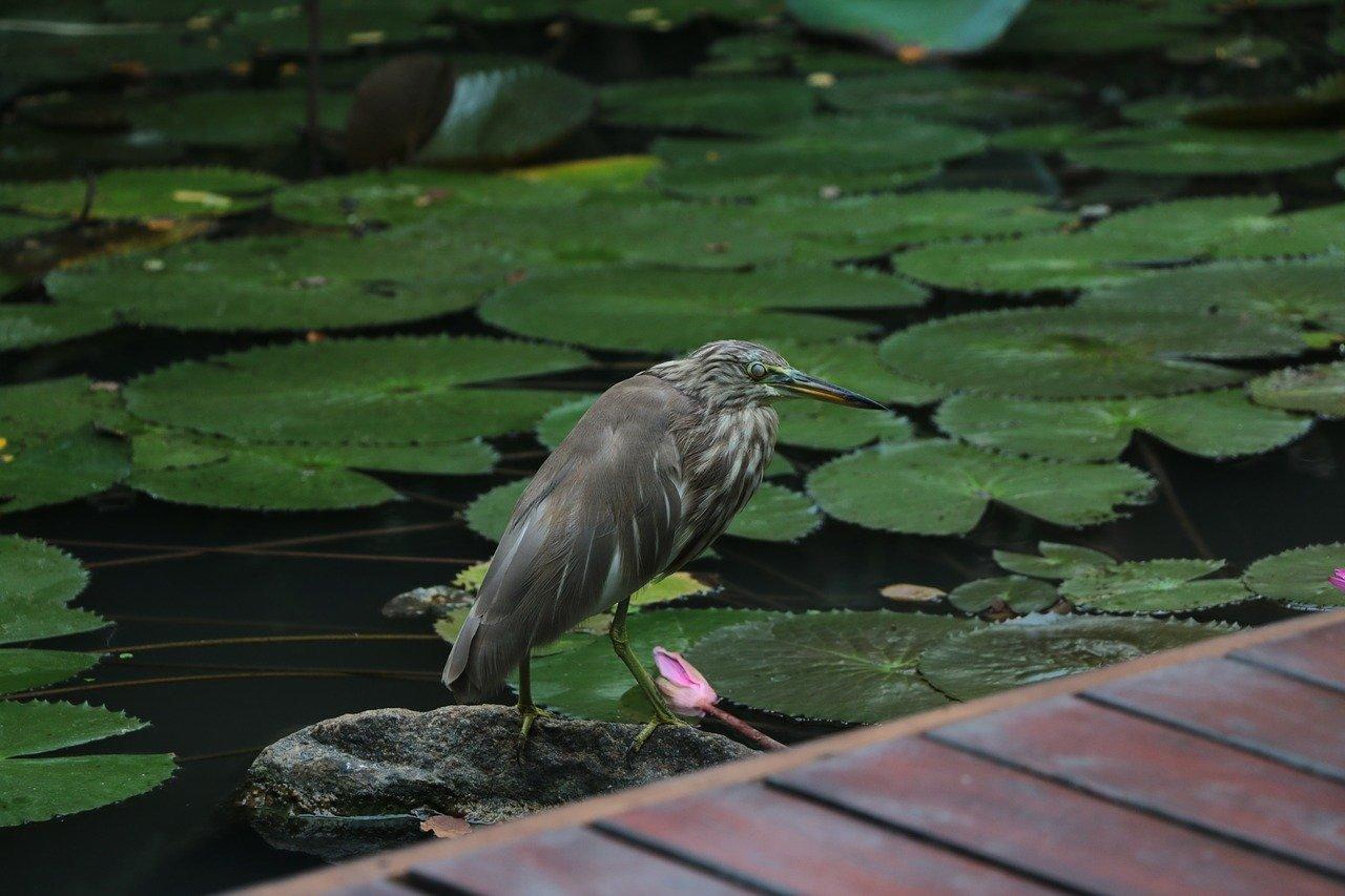 Sri Lanka Birding Tour 2