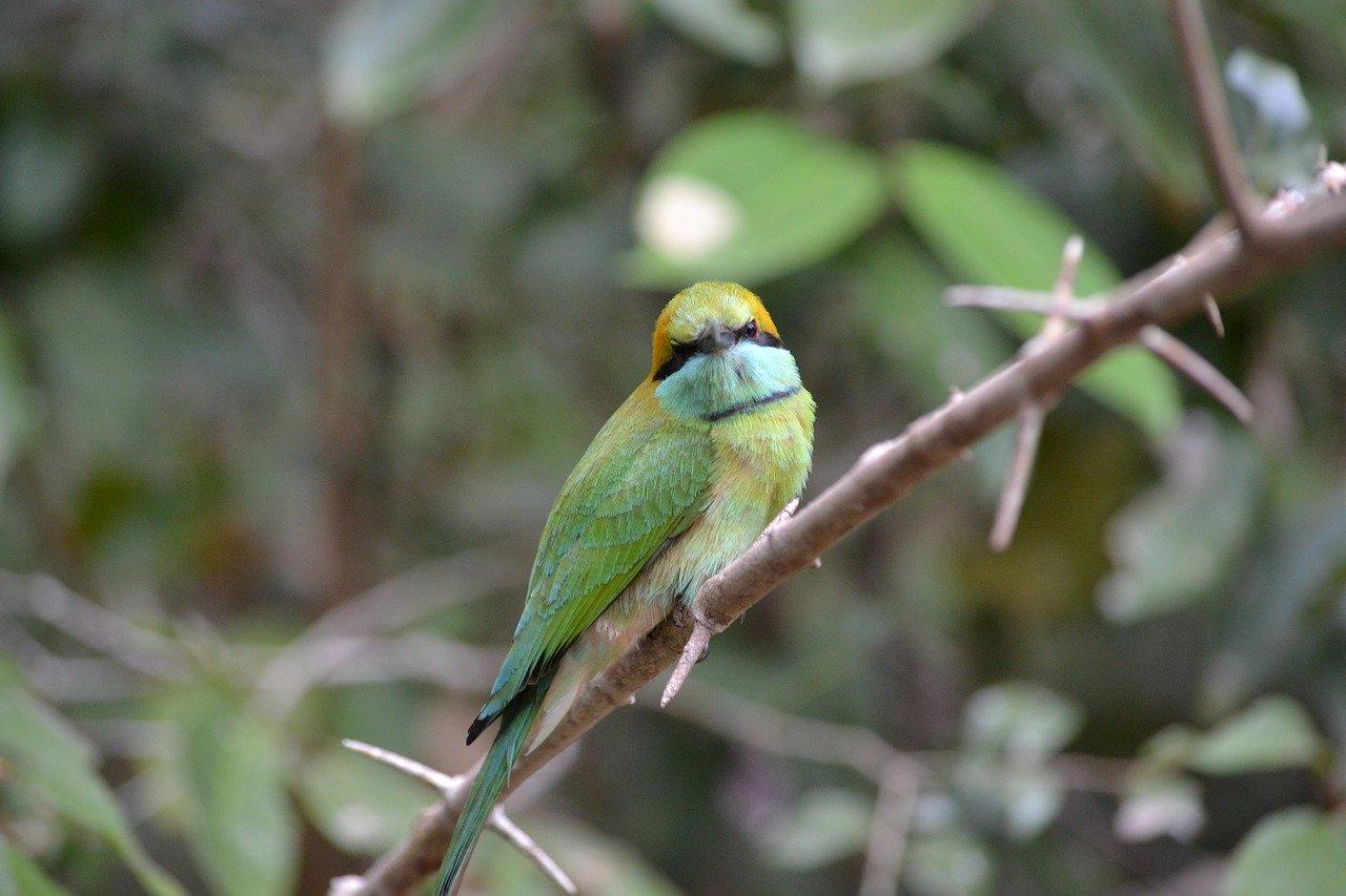 Sri Lanka Birding Tour 3