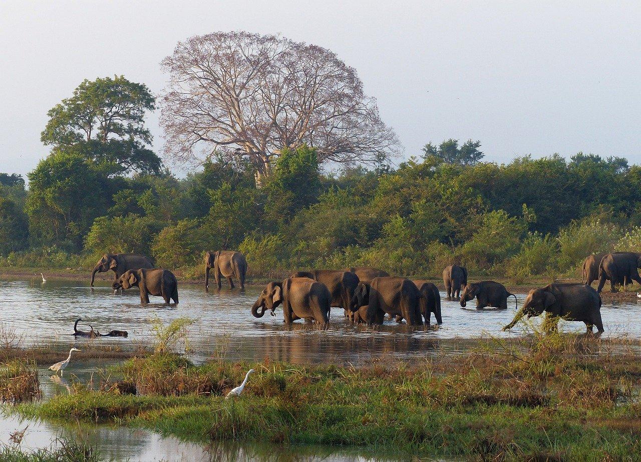 Sri Lanka Birding Tour 6