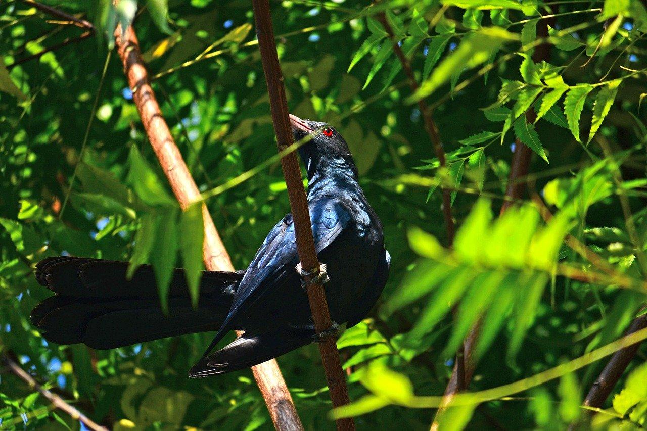 Sri Lanka Birding Tour 4