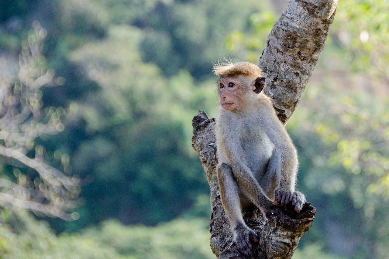 Sri Lanka Adventure Trip 3