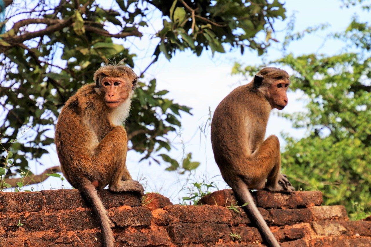 A Week in Sri Lanka 2