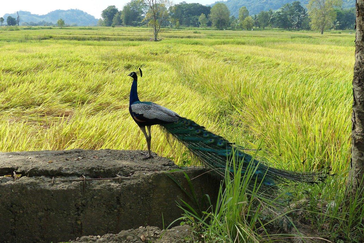 Sri Lanka Birding Tour 7