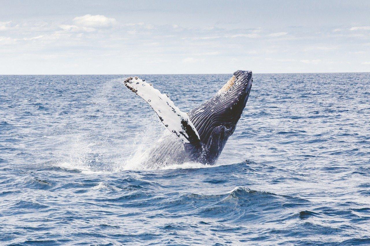 Mirissa Whale Watching Tour 5