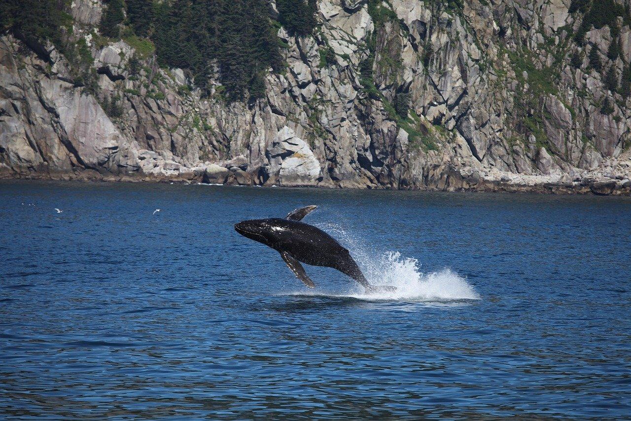 Mirissa Whale Watching Tour 2