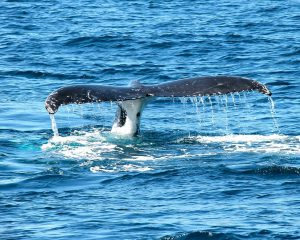 #Mirissa Whale Watching Tour