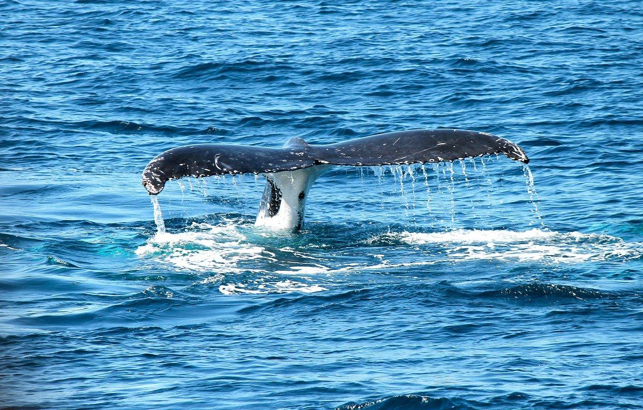 #Mirissa Whale Watching Tour