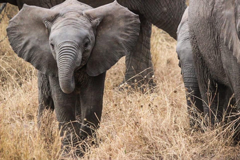 Budget Safari Tanzania Tour 1