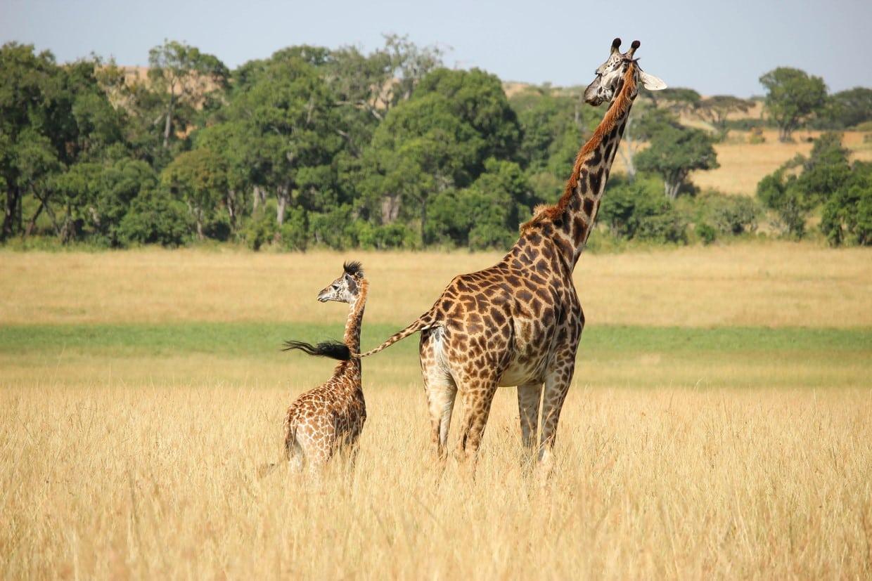 Budget Safari Tanzania Tour 2