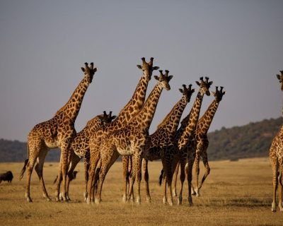 #Highlights of Tanzania Safari