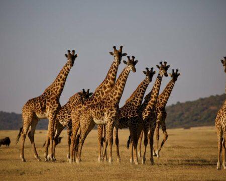 #Highlights of Tanzania Safari