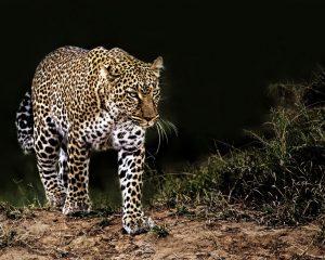 #Budget Safari Tanzania Tour