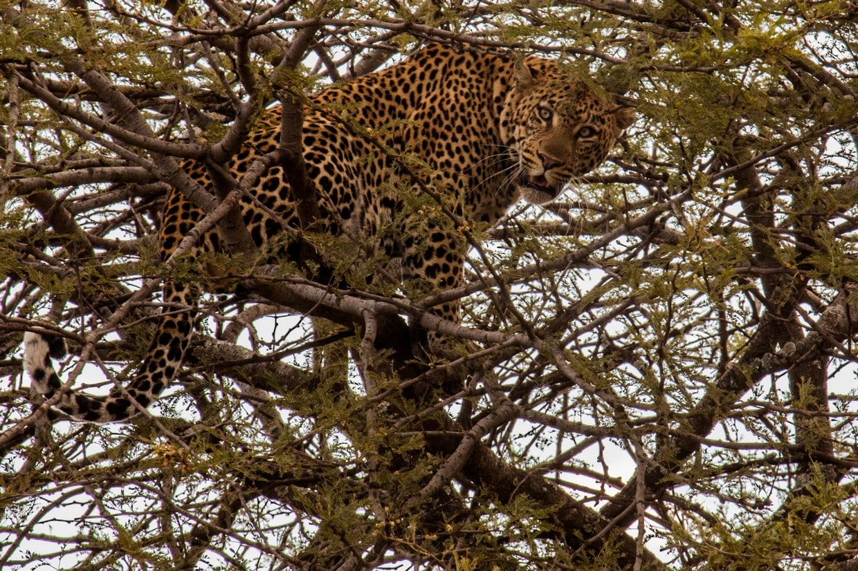 Tanzania Wildlife Safari Tour 6