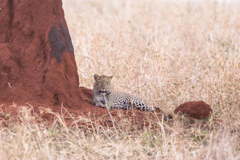 Highlights of Tanzania Safari - Tarangire - Serengeti - Ngorongoro 7