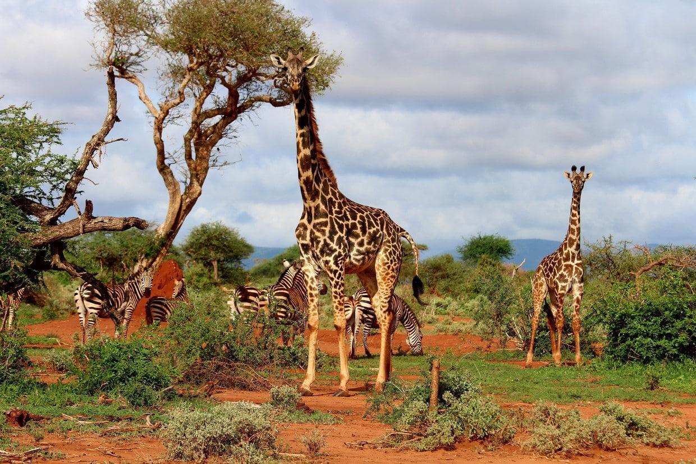 Tanzania National Park (4)