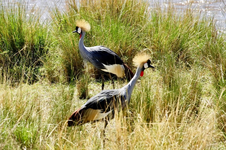 Highlights of Tanzania Safari - Tarangire - Serengeti - Ngorongoro 1