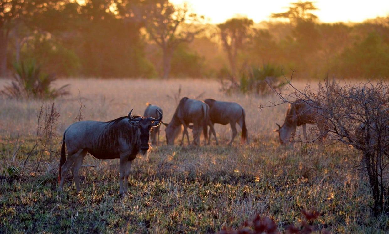 Budget Safari Tanzania Tour 9