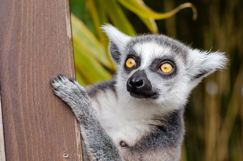 Madagascar Baobabs and Lemur Tour 3